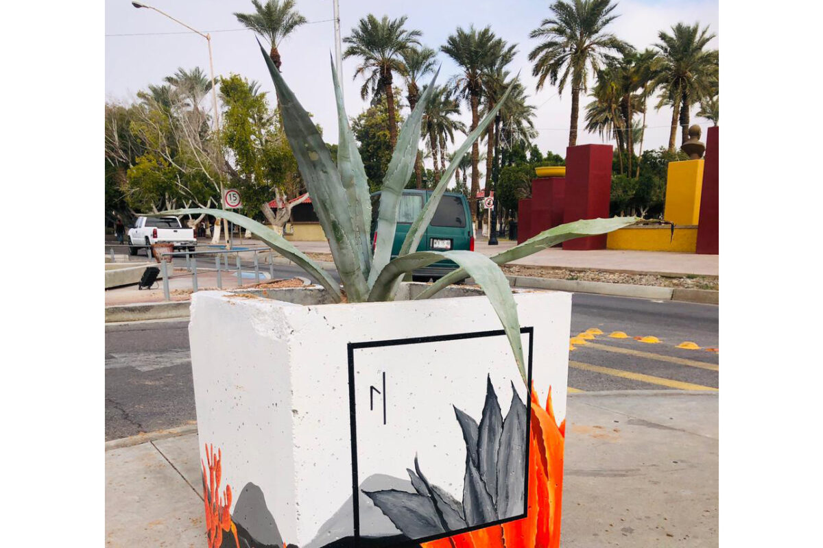 Llama Ecología a valorar árboles y plantas del desierto