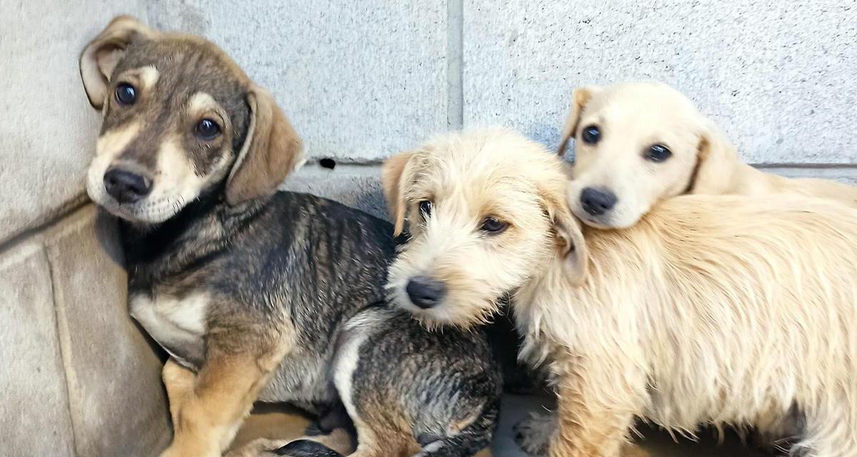 Reitera Control Animal invitación a adoptar una mascota