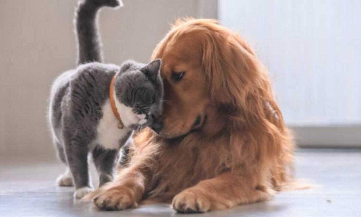 Disponibles citas para esterilización de mascotas en CCA de SLRC