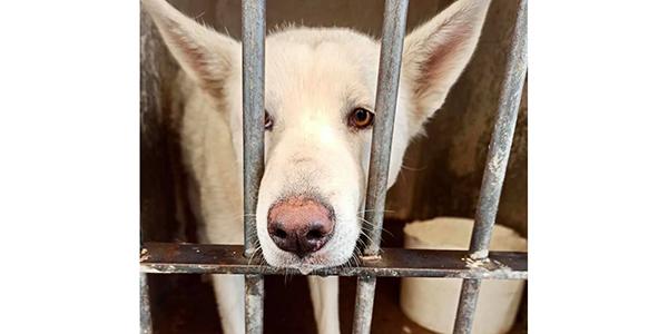 La adopción de mascotas combate el maltrato animal