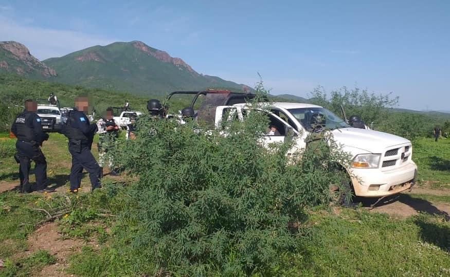 Incautan armas de alto poder y equipo táctico en Magdalena; se mantienen operativos