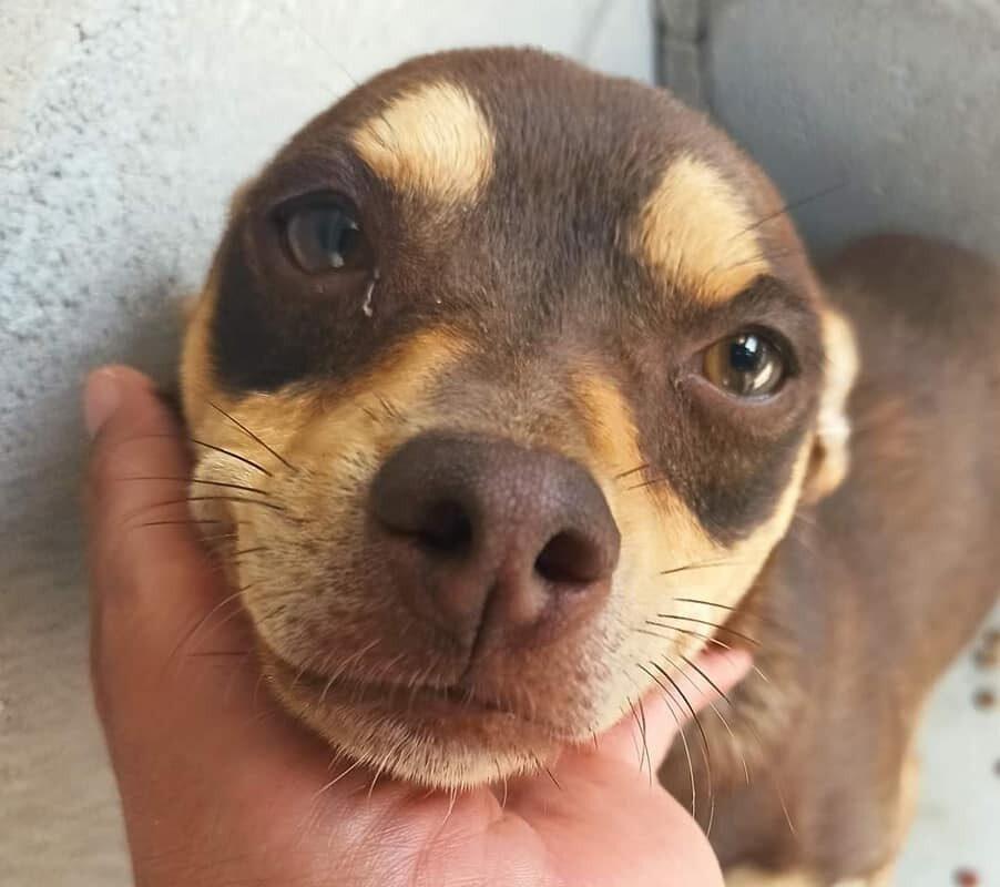 Control animal invita a los sanluisinos a denunciar el maltrato animal